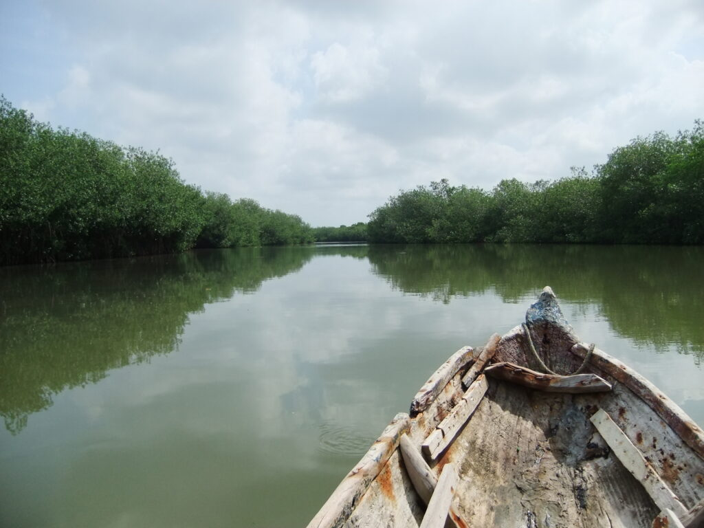 mangroven-11-1024x768
